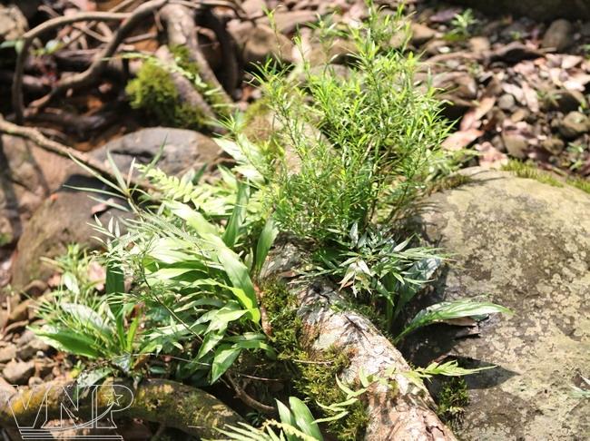Un tapis végétal sur les rochers.