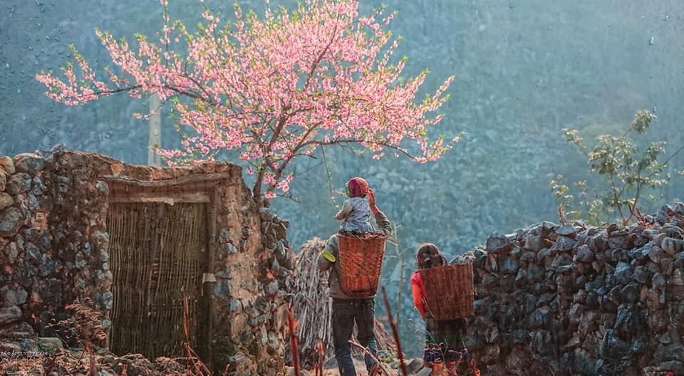 바위의 꽃