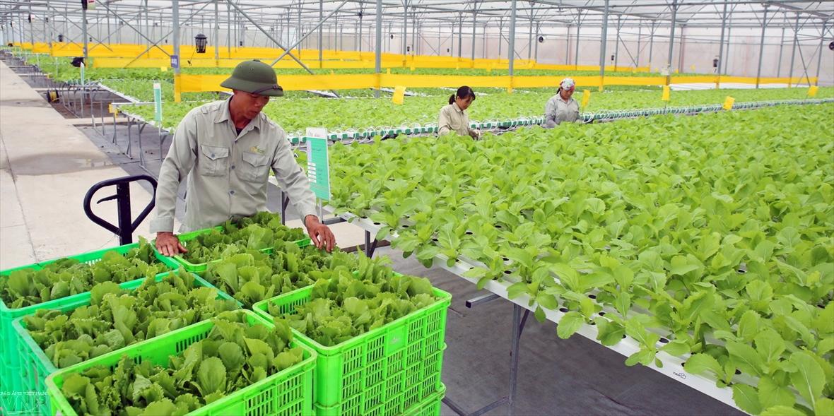 Agricultura limpia en el jardín VinEco