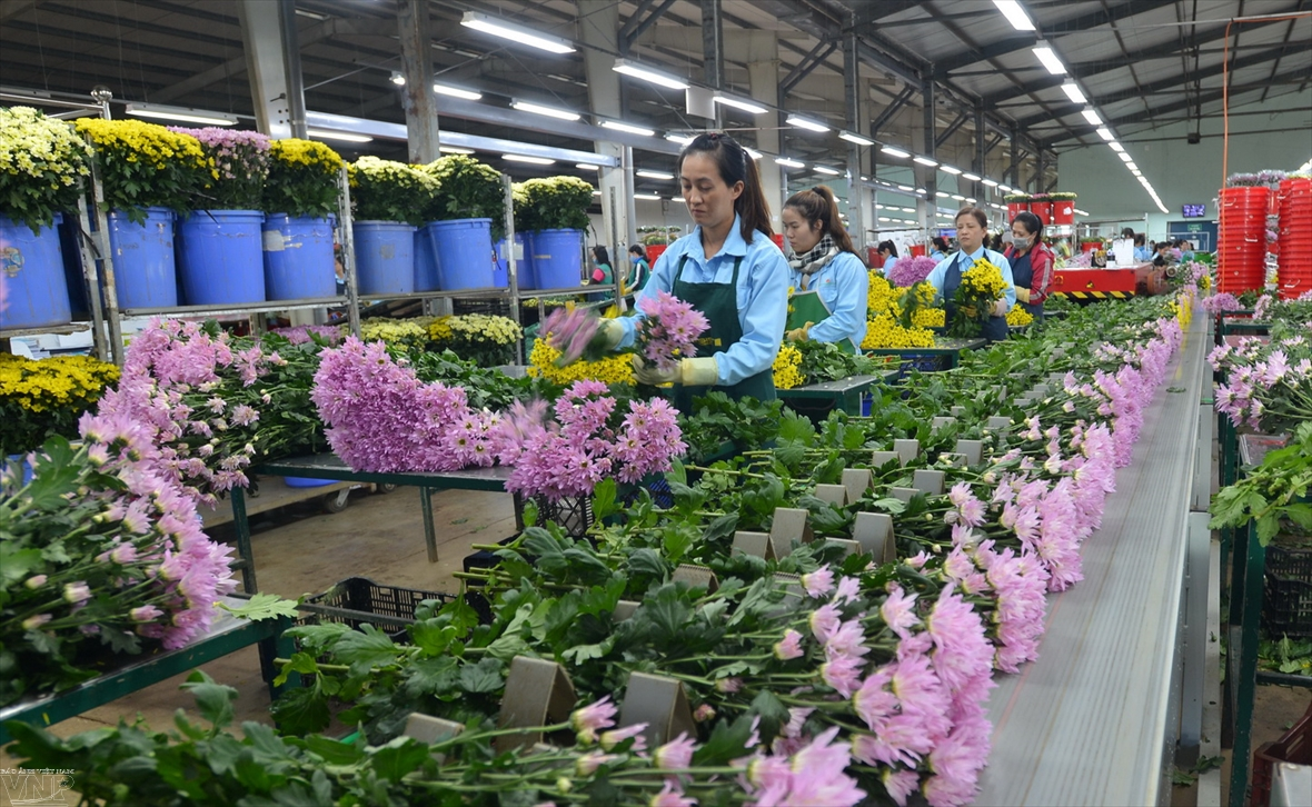Da Lat the capital of flower export