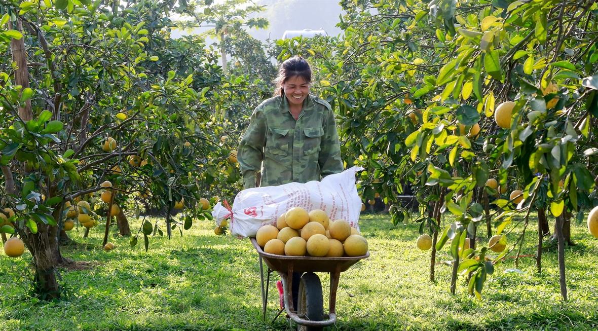 Hanoi realiza cinco tareas clave para garantizar la seguridad alimentaria