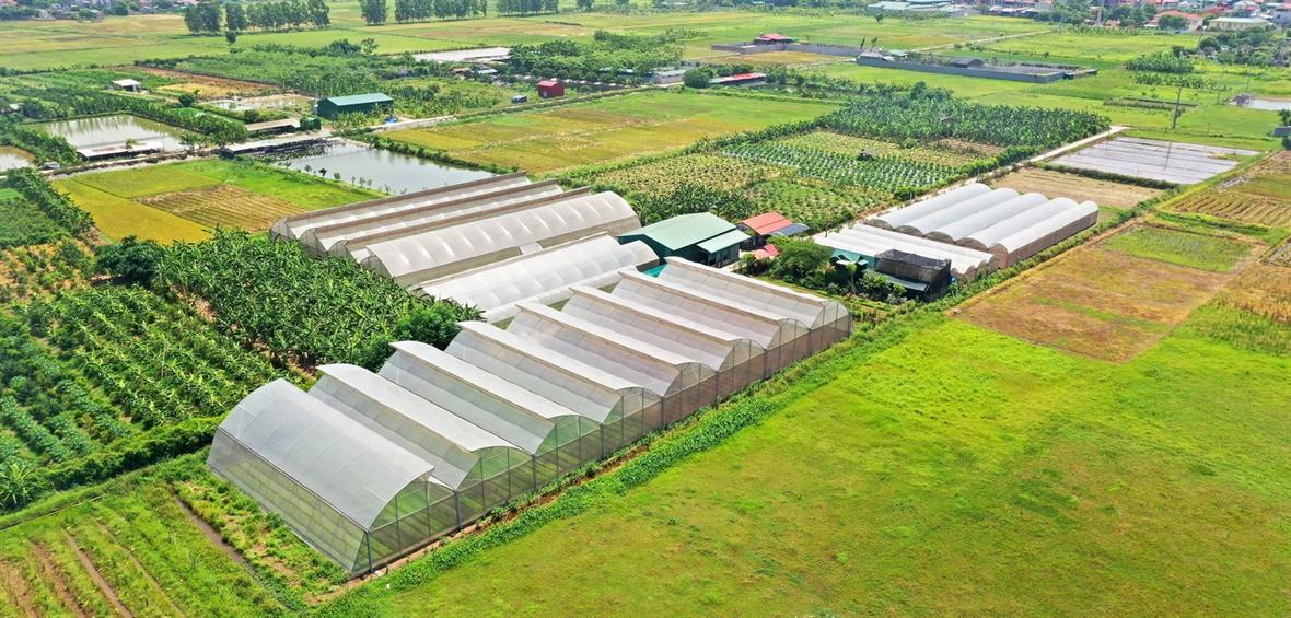 Безопасное производство и потребление сельскохозяйственной продукции в Ханое в условиях эпидемии Covid-19