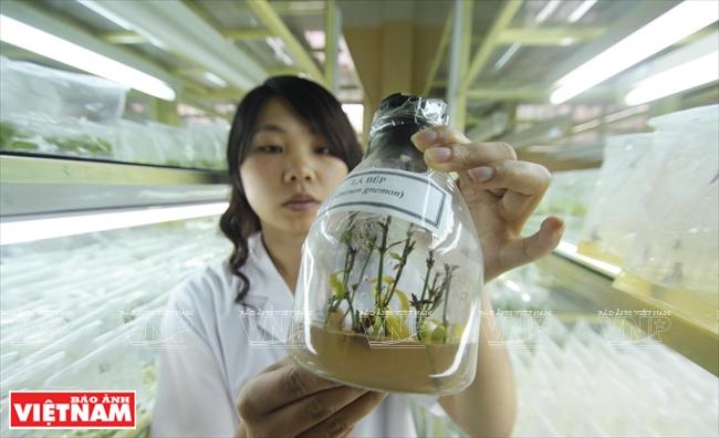 現代の新しい技術で栽培される植...