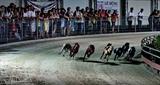 Carreras de perros en Vung Tau