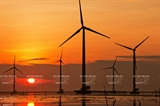 베트남 풍력 발전 성공 사례 – 박리우(Bạc Liêu)성 풍력발전