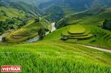 Террасированные рисовые поля - чудо Северо-Западного региона.