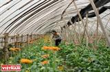 Йен Шо - пример нового сельского строительства в Ханое