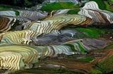Hermosas terrazas de arroz en Mu Cang Chai