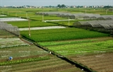 Высокотехнологичное производство в сельском хозяйстве