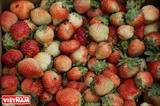Aгротуризм на клубничной ферме в Далате