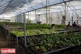La Ferme de légumes bio Canh Cam