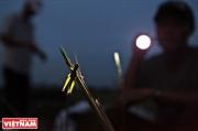 Tiempo de caza y captura de saltamontes