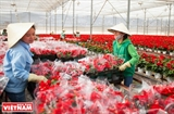 Da Lat - A Kingdom of Vegetables and Flowers