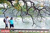 The Beauty of Hoan Kiem Lake during the Season of Loc Vung Trees Shedding Their Leaves