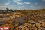 Mekong Delta  Struggling with Drought Saline Intrusion
