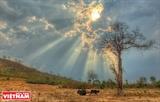 Cierre de bosques naturales en Tay Nguyen