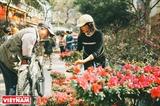 Nhộn nhịp chợ hoa Xuân Hàng Lược