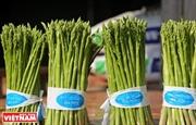 Hồng Thái trồng măng tây theo tiêu chuẩn VietGap