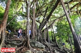 El antiguo baniano del bosque de Son Tra
