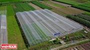 하노이와 흥옌(Hưng Yên)을 잇는 청정농산물 공급