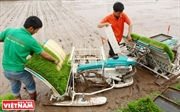 Mechanisation in Rice Production in Hanoi