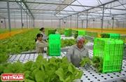 Hi-tech Farming Means Better Vietnamese Agriculture