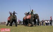 Гонки слонов на озере Лак