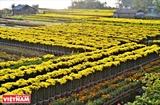 Xứ sở ngàn hoa đất phương Nam