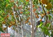 Lai Vung - Reino de las mandarinas¨