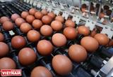 8000億ドンの投資金で生産される卵工場