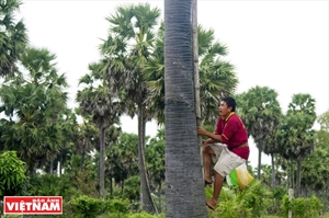 El azúcar de palma una especialidad de An Giang