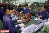 Minh Hòa - hành trình chinh phục thị trường thế giới
