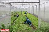 Les légumes bio de la ferme Nhât Viêt
