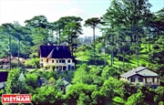 Khu biệt thự cổ giữa rừng thông Đà Lạt