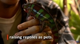 Reptiles become household pets