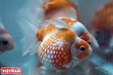 Thế giới cá cảnh muôn màu
