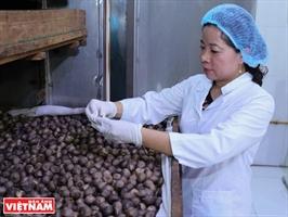 Открывшая ценность лекарственных растений Вьетнама