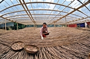 Lhistoire des pailles en bambou