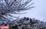 ソンラー省のバッイエン郡の霧氷