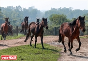 북부지역에서 가장 큰 말 농장