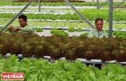 Ứng dụng công nghệ New Zealand vào sản xuất nông nghiệp ở Đồng Xoài