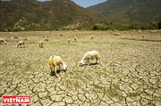 亚欧会议就应对气候变化问题分享经验