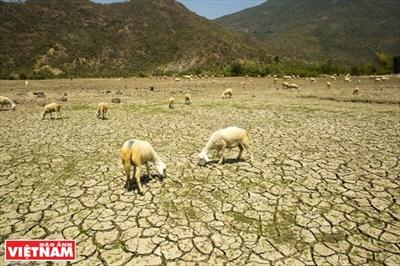 Форум АСЕМ по реагированию на изменение климата