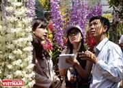 Mô hình trồng lan rừng công nghệ cao xứ trà BLao