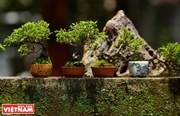 Mini bonsai trees show an artisans creativeness