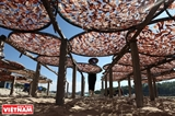 Деревня переработки морепродуктов Са Хуйнь