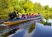 Immersion dans la forêt de cajeputiers de la zone touristique   Canh Dông Bât Tân