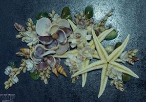 Những siêu phẩm từ vỏ ốc