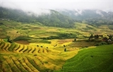 Lào Cai : la beauté des rizières dY Ty à la saison du riz mûr
