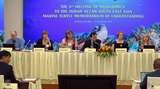 Tăng cường quản lý bảo tồn rùa biển ở khu vực Ấn Độ Dương và Đông Nam Á